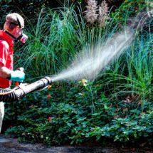 How to get the best Insect Treatment Service in York PA?