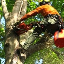 Four Tips You Need to Know Before Hiring Tree Service in Lancaster Pa